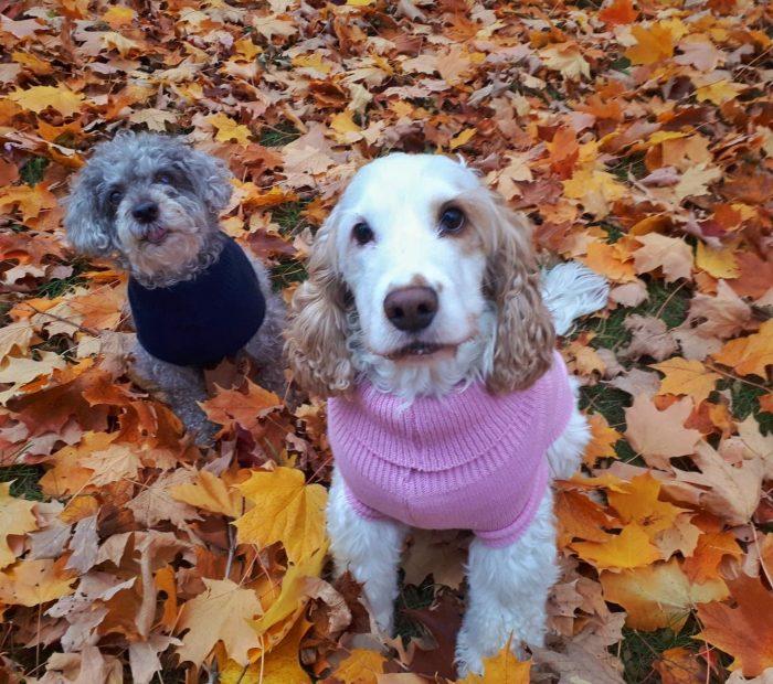 chandails de laine pour chiens