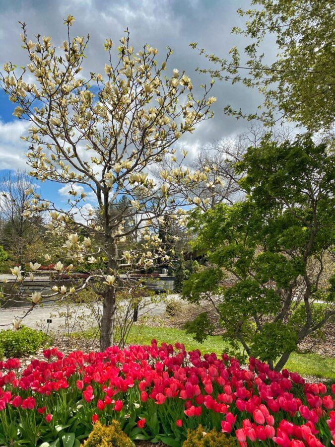 redécouvrir le jardin botanique de Montréal