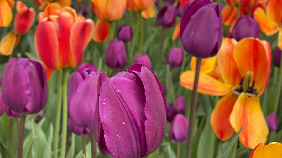 les fleurs du printemps au jardin botanique